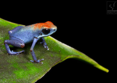 Category 1: Amphibian Portraits
