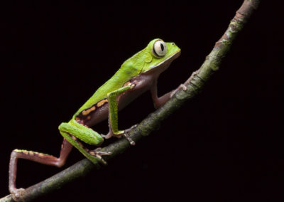 Category 1: Amphibian portraits